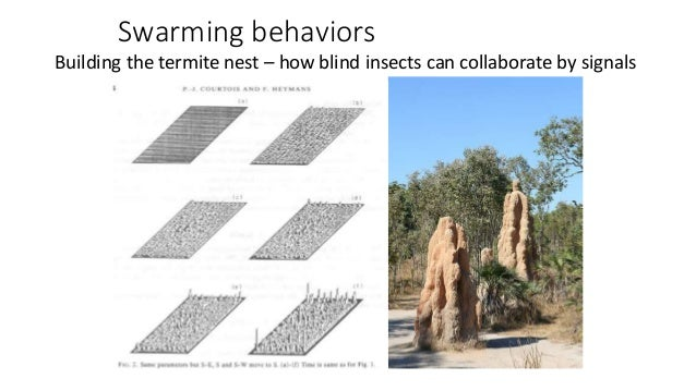 Swarming behaviors Building the termite nest – how blind insects can collaborate by signals