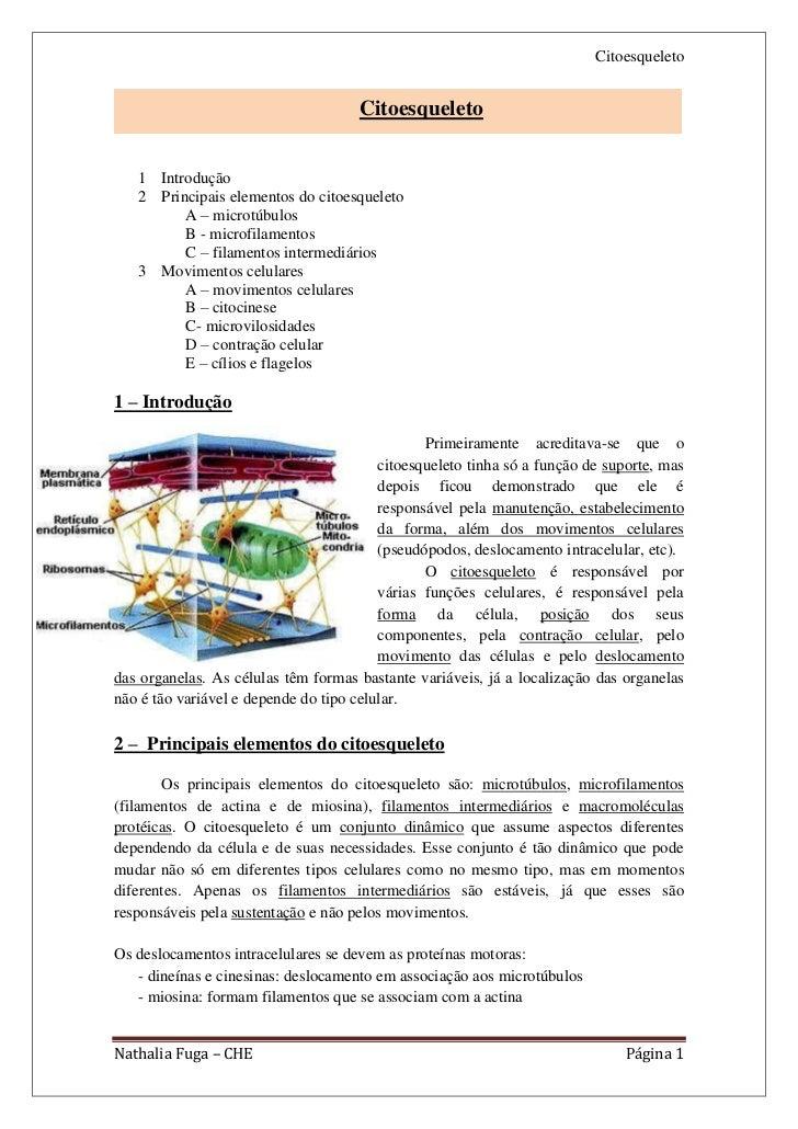 Citoesqueleto                                     Citoesqueleto   1 Introdução   2 Principais elementos do citoesqueleto  ...