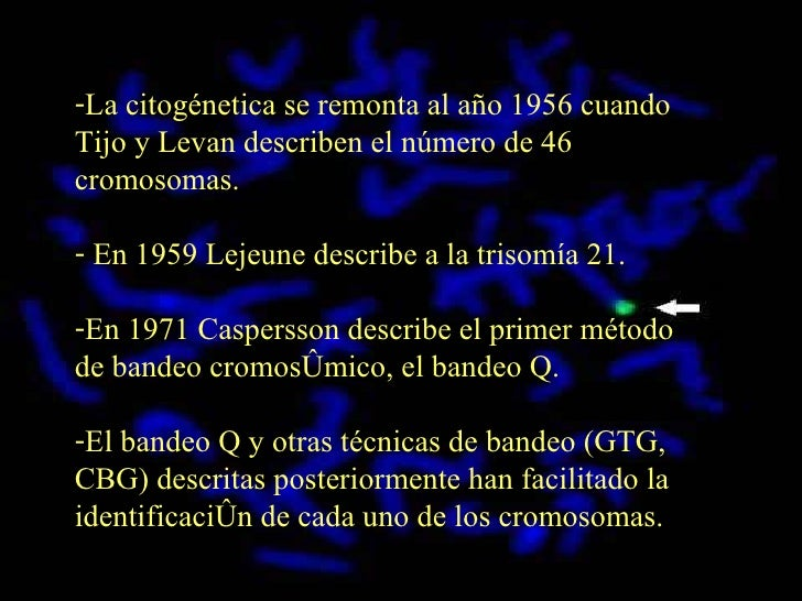C I T O G E NÉ T I C A  C LÁ S I C A  Y  C I T O G E NÉ T I C A  M O L E C U L A R (97  2003) Slide 3