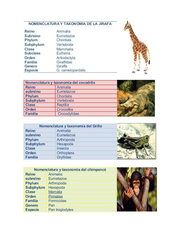 Citolog a for Taxonomia de la jirafa
