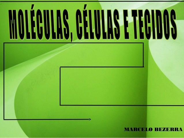 MARCELO BEZERRA