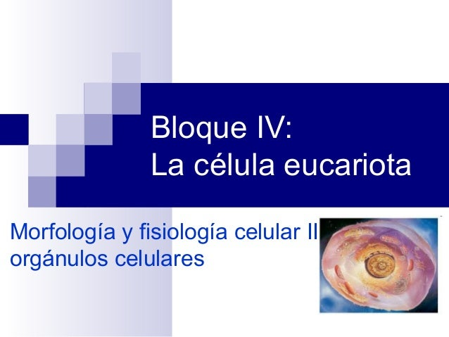 Bloque IV: La célula eucariota Morfología y fisiología celular II: orgánulos celulares
