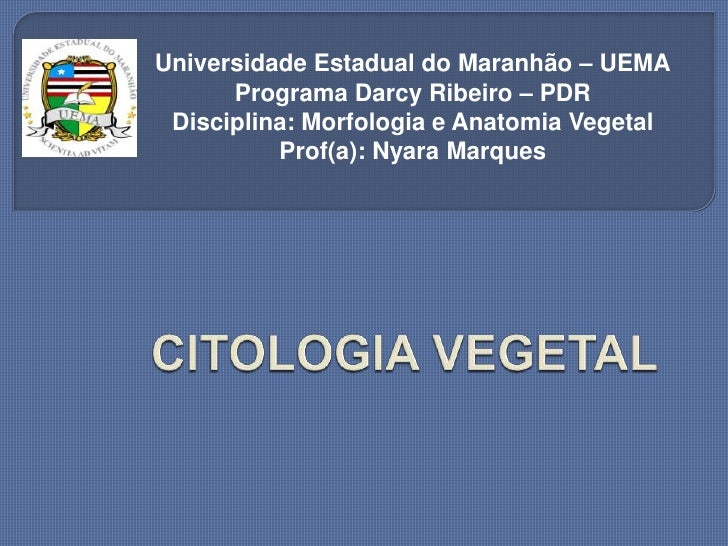 Universidade Estadual do Maranhão – UEMA      Programa Darcy Ribeiro – PDR Disciplina: Morfologia e Anatomia Vegetal      ...