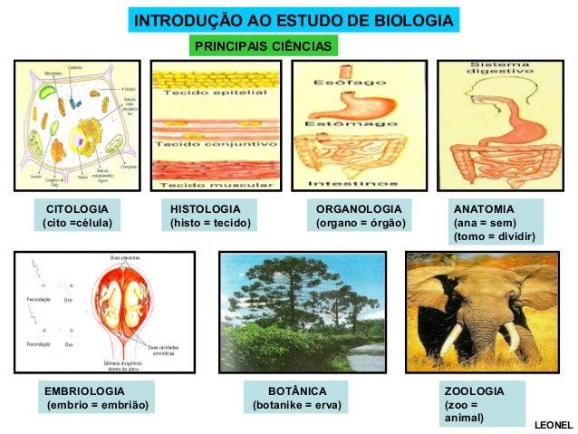INTRODUÇÃO AO ESTUDO DE BIOLOGIA PRINCIPAIS CIÊNCIAS  CITOLOGIA (cito =célula)  EMBRIOLOGIA (embrio = embrião)  HISTOLOGIA...