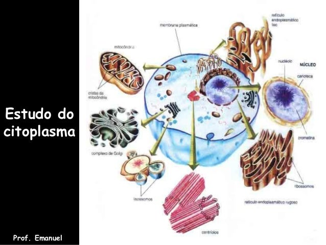 Estudo docitoplasmaProf. Emanuel