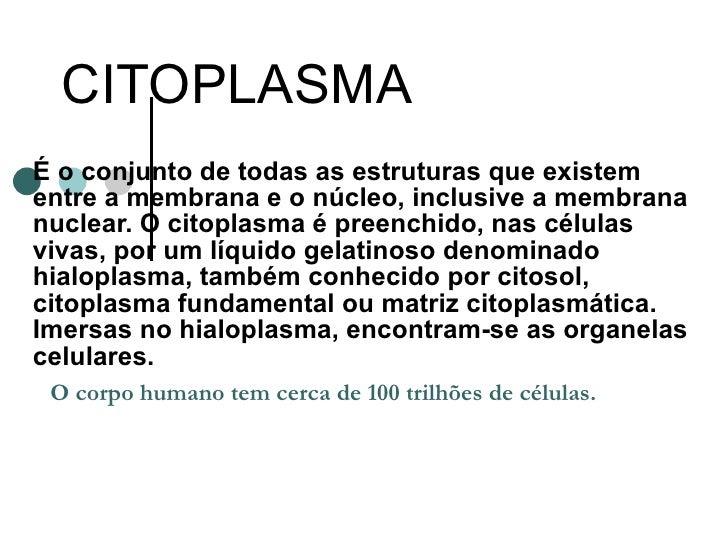 Citoplasma 2