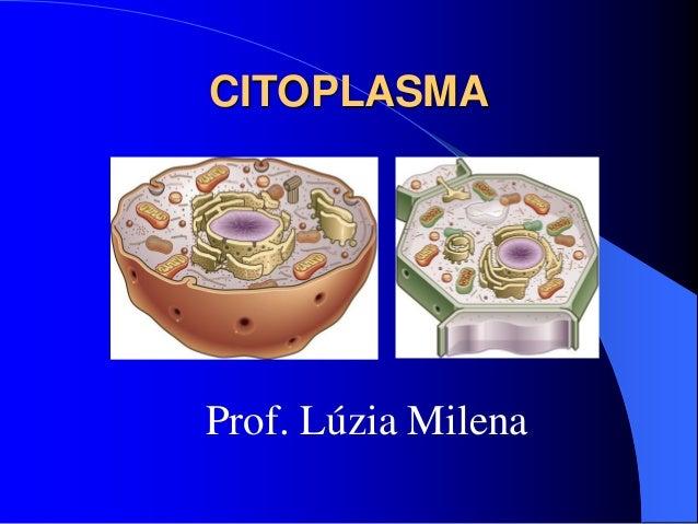 CITOPLASMA Prof. Lúzia Milena