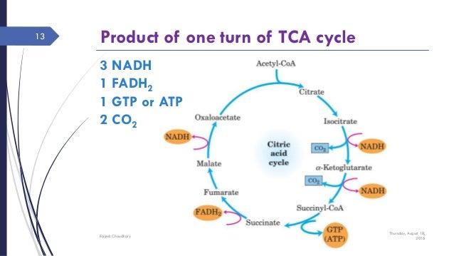 cycle citric acid tca turn