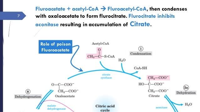 amphibolic nature of tca cycle pdf