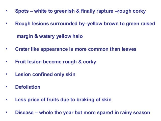 • Spots – white to greenish & finally rapture –rough corky • Rough lesions surrounded by–yellow brown to green raised marg...