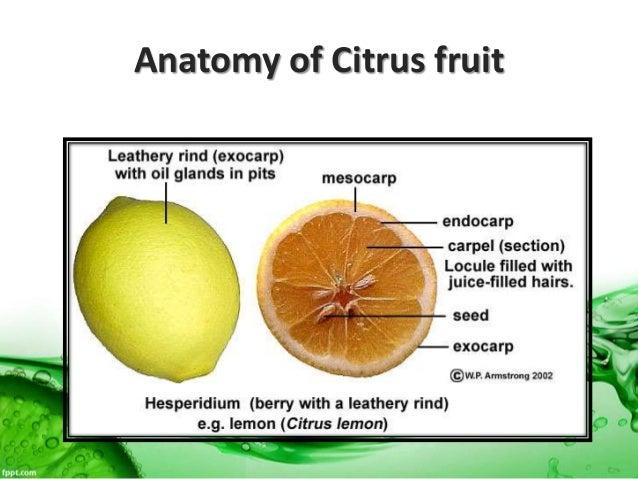 Post Harvest Diseases Of Citrus
