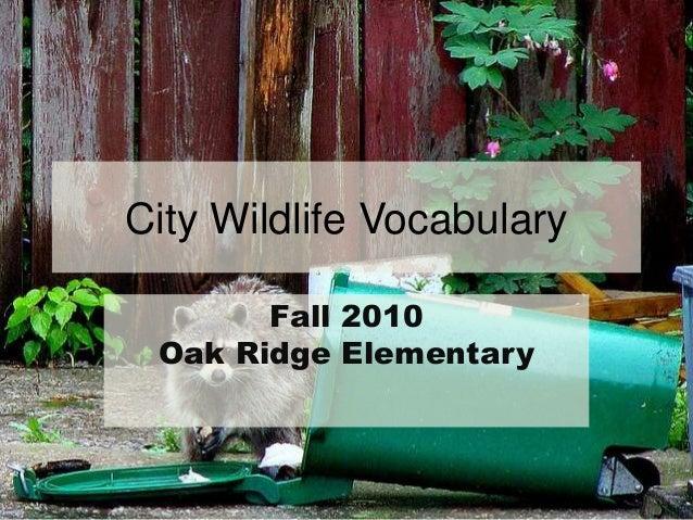 City Wildlife Vocabulary Fall 2010 Oak Ridge Elementary