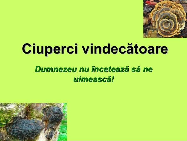Ciuperci vindecătoareCiuperci vindecătoare Dumnezeu nu încetează să neDumnezeu nu încetează să ne uimească!uimească!