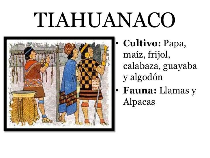 TIAHUANACO     • Cultivo: Papa,       maíz, frijol,       calabaza, guayaba       y algodón     • Fauna: Llamas y       Al...