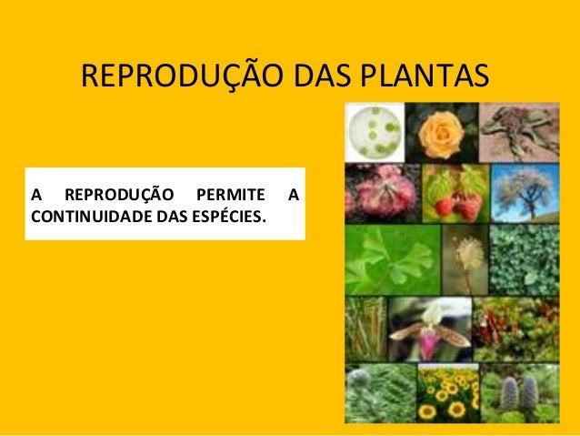 REPRODUÇÃO DAS PLANTAS A REPRODUÇÃO PERMITE A CONTINUIDADE DAS ESPÉCIES.