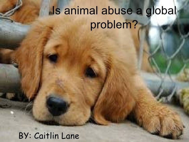 Is animal abuse a global               problem?BY: Caitlin Lane