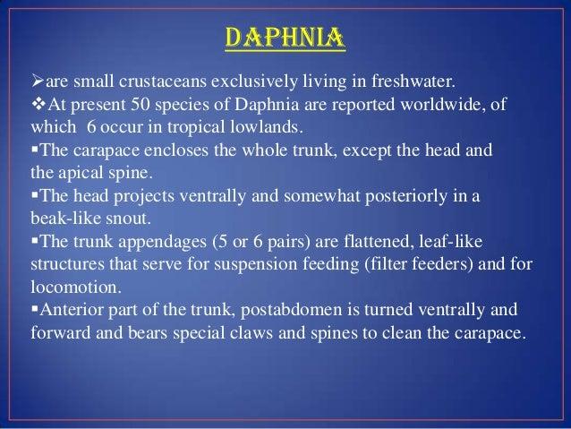 Daphnia asexual reproduction in fungi