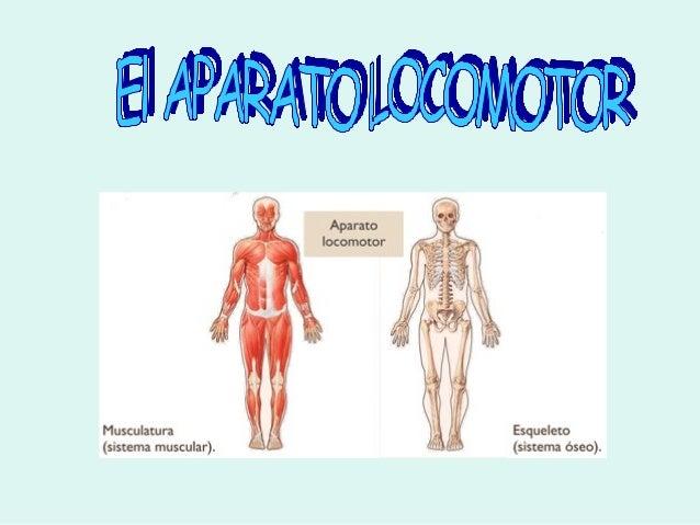 EL SISTEMA NERVIOSO El sistema nervioso está constantemente recibiendoinformación del exterior y del interior de nuestrocu...