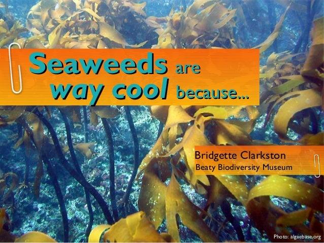 Seaweeds are way cool because...               Bridgette Clarkston               Beaty Biodiversity Museum                ...