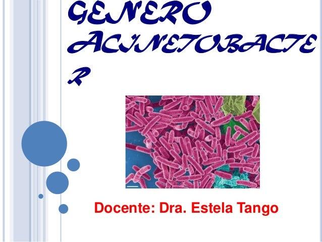 GÉNEROACINETOBACTER    Docente: Dra. Estela Tango