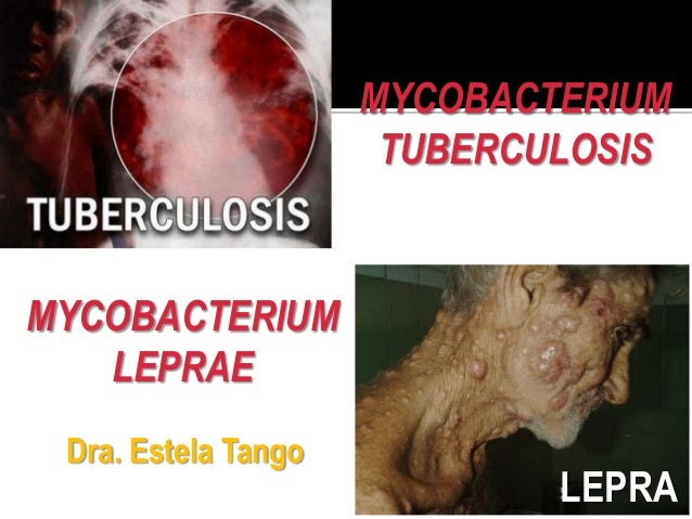MYCOBACTERIUM                      TUBERCULOSISMYCOBACTERIUM   LEPRAE Dra. Estela Tango                             LEPRA