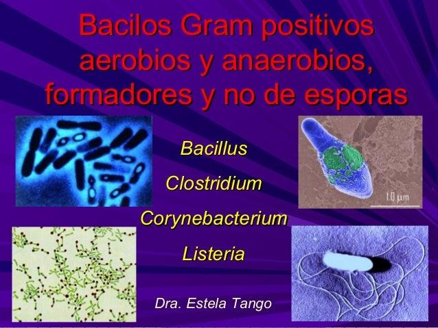 Bacilos Gram positivos   aerobios y anaerobios,formadores y no de esporas          Bacillus        Clostridium      Coryne...