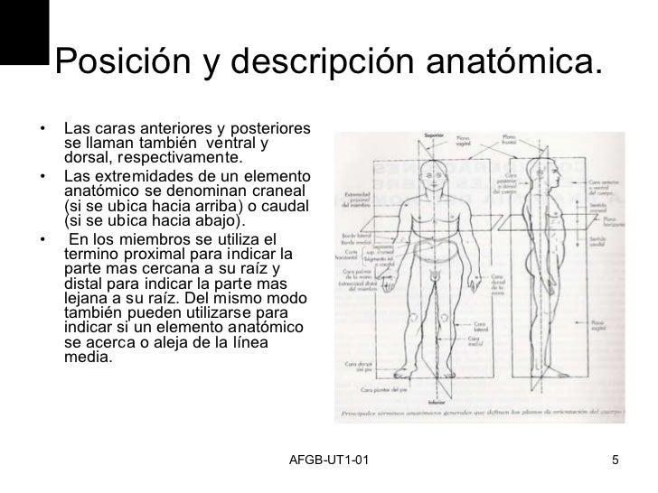 Clase Anatomia 1