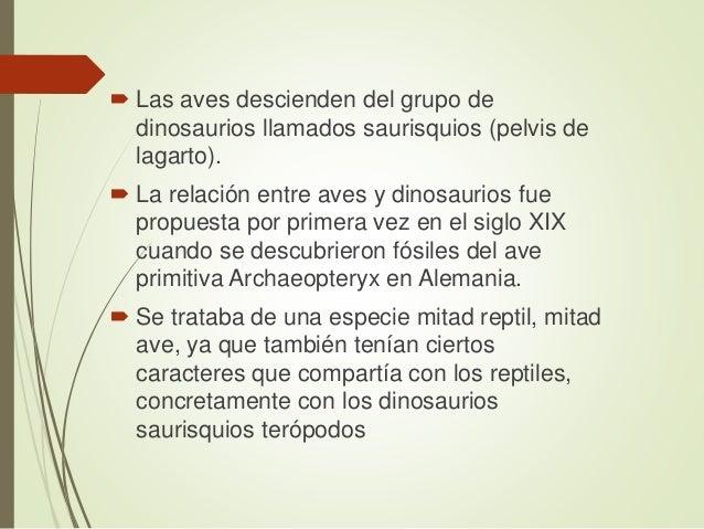  Este grupo a su vez, está dividido en los sauropodomorfos (grandes dinosaurios herbívoros de cuello largo ) El otro grup...