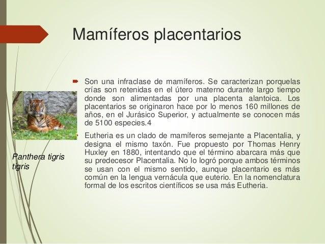 Mamíferos placentarios  Son una infraclase de mamíferos. Se caracterizan porquelas crías son retenidas en el útero matern...