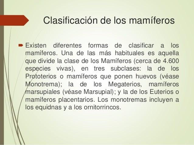 Clasificación de los mamíferos  Existen diferentes formas de clasificar a los mamíferos. Una de las más habituales es aqu...