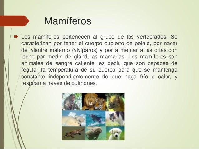 Mamíferos  Los mamíferos pertenecen al grupo de los vertebrados. Se caracterizan por tener el cuerpo cubierto de pelaje, ...