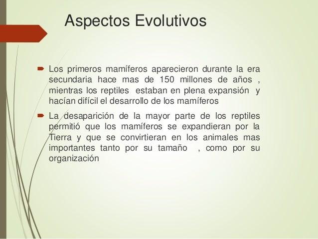 Aspectos Evolutivos  Los primeros mamíferos aparecieron durante la era secundaria hace mas de 150 millones de años , mien...