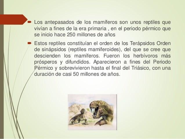  Los antepasados de los mamíferos son unos reptiles que vivían a fines de la era primaria , en el periodo pérmico que se ...