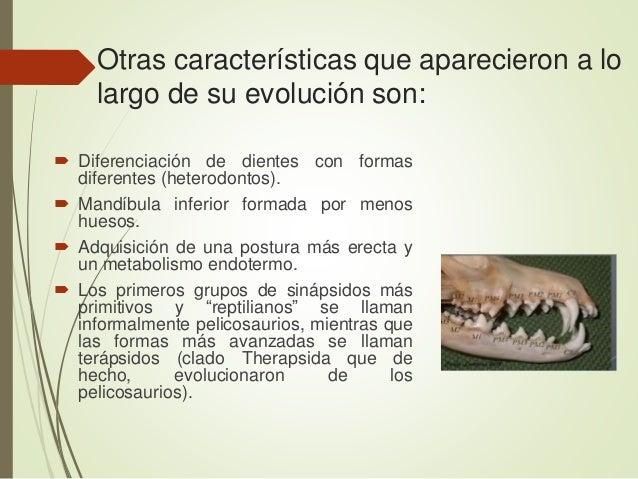 Otras características que aparecieron a lo largo de su evolución son:  Diferenciación de dientes con formas diferentes (h...