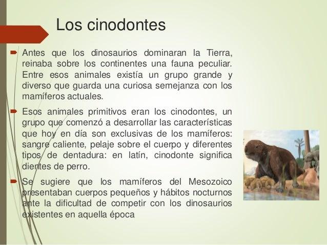 Los cinodontes  Antes que los dinosaurios dominaran la Tierra, reinaba sobre los continentes una fauna peculiar. Entre es...