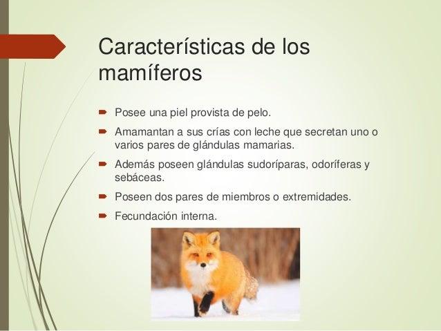 Características de los mamíferos  Posee una piel provista de pelo.  Amamantan a sus crías con leche que secretan uno o v...