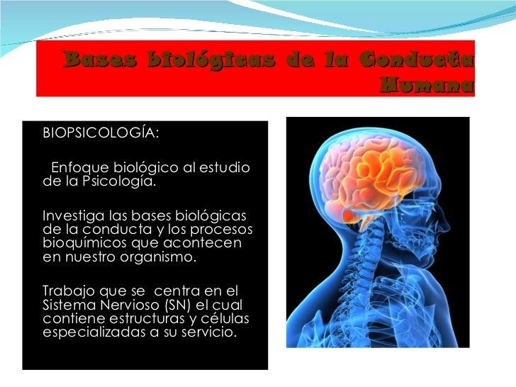 Clase 04 Bases Biologicas Del Comportamiento