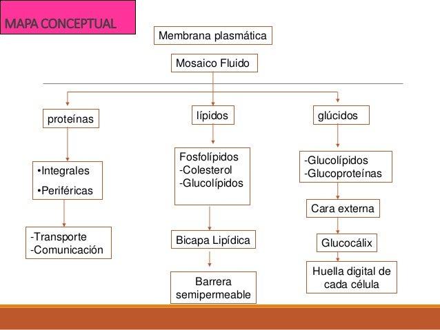 Clase1 Biología Celular