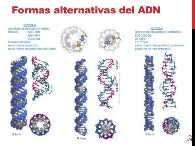 Clase 1 Estructura Compos Adn Y Proteinas