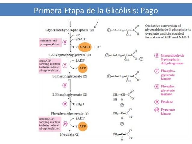 Medicina en Ibuprofeno metabolismo