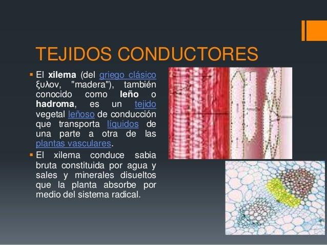 Clase 14.1 anatomia interna de la hoja