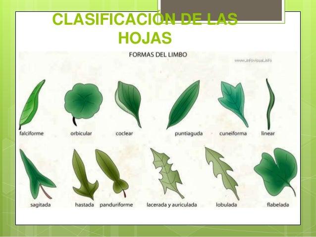 Clase 14 la hoja for Tipos de hojas ornamentales