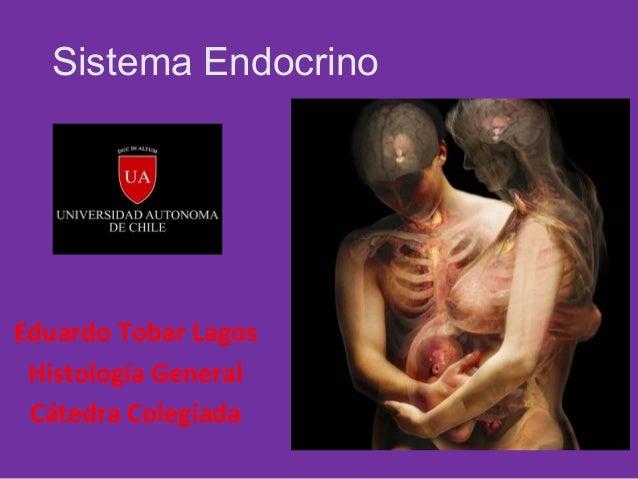 Sistema Endocrino  Eduardo Tobar Lagos Histología General Cátedra Colegiada
