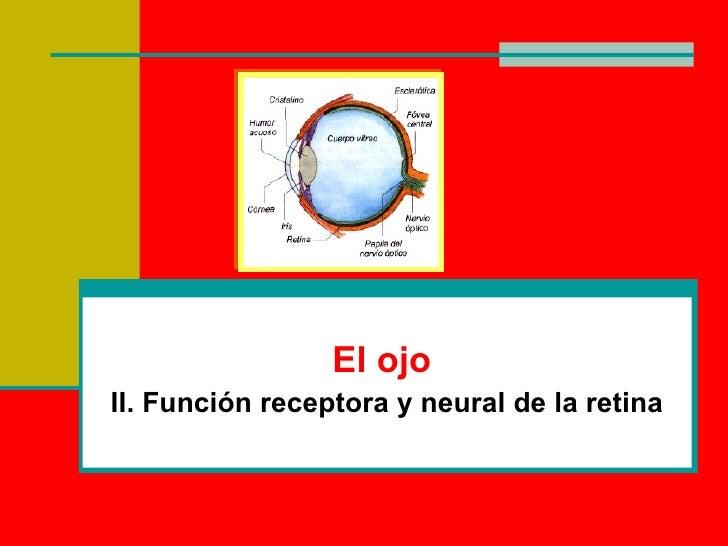 El ojo II. Función receptora y neural de la retina