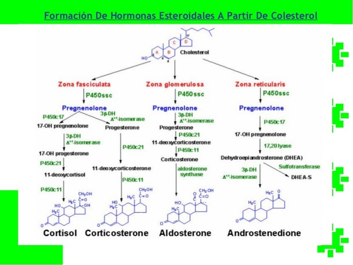 Biosintesis De Acidos Grasos Pdf