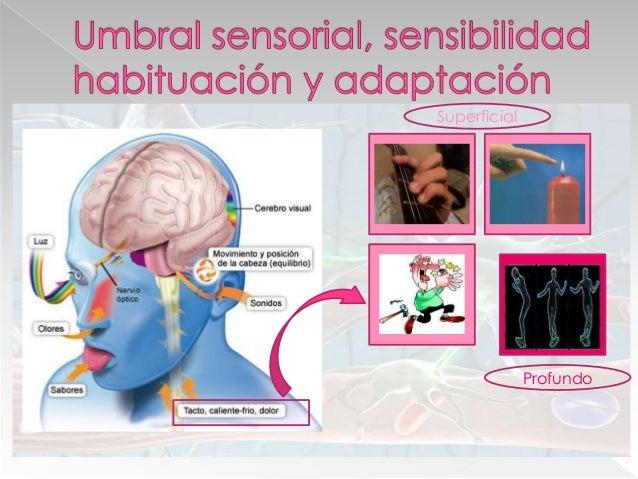  Función: › Permite el movimiento, el mantenimiento de la estructura corporal y algunas funciones de los órganos.  Tipos...