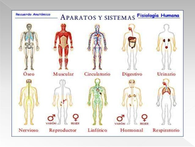 Clase 1 anatomía y fisiología