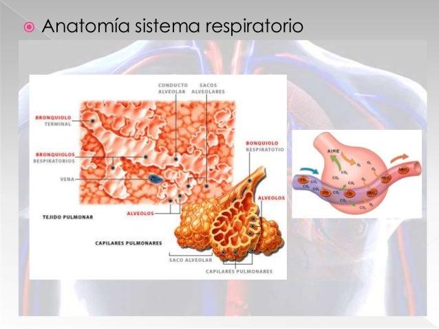  Función: › Aporte ininterrumpido de sangre en tejidos › Transporte de O2 y CO2 › Aporte de nutrientes