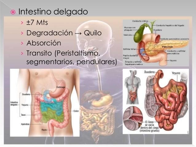  Hígado y Vías biliares › Síntesis de proteínas plasmáticas › función desintoxicante › Almacén de vitamina y glucógeno › ...