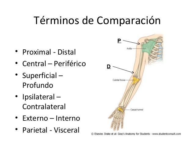 Clase 1 anatomia